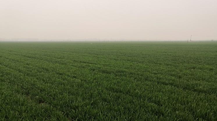 国内首个耕地地力指标分级法定标准通过审定