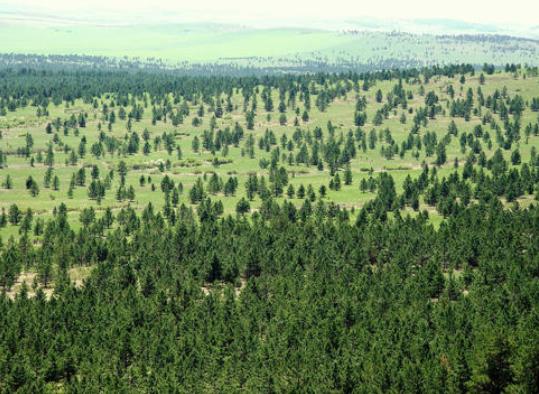 国家林草局:中国已成功遏制荒漠化扩展态势